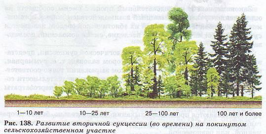 Экологическая сукцессия | экология