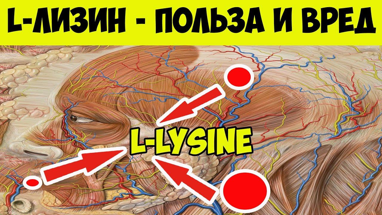 Солгар л-лизин – свойства, инструкция, отзывы и цены