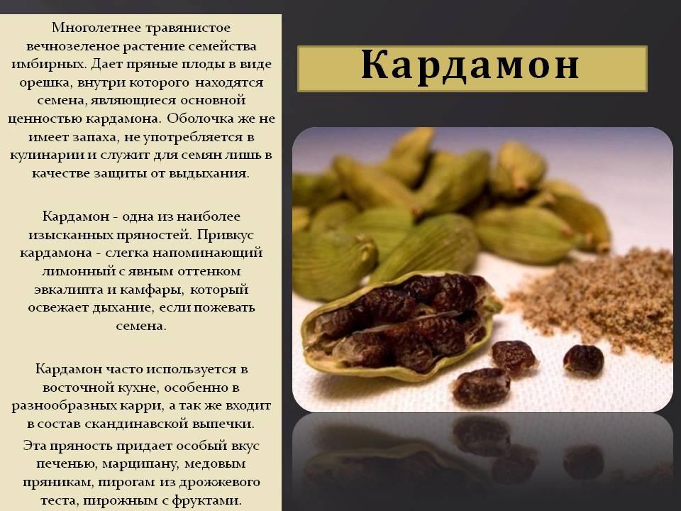Кардамон: польза и вред для здоровья мужчин и женщин, после 50 лет, при беременности, виды (зеленый, черный, молотый), как выглядит и растет, как употреблять