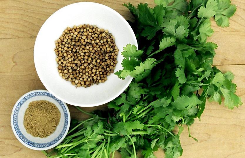 Полезные свойства кориандра (кинзы), способы приготовления и сфера применения