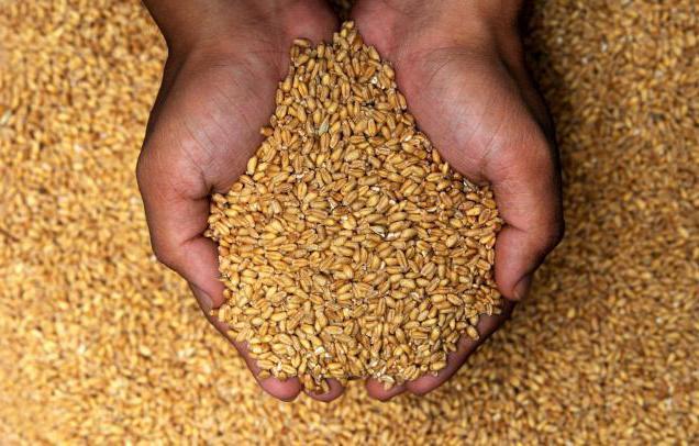 Особенности растениеводства в россии — cельхозпортал