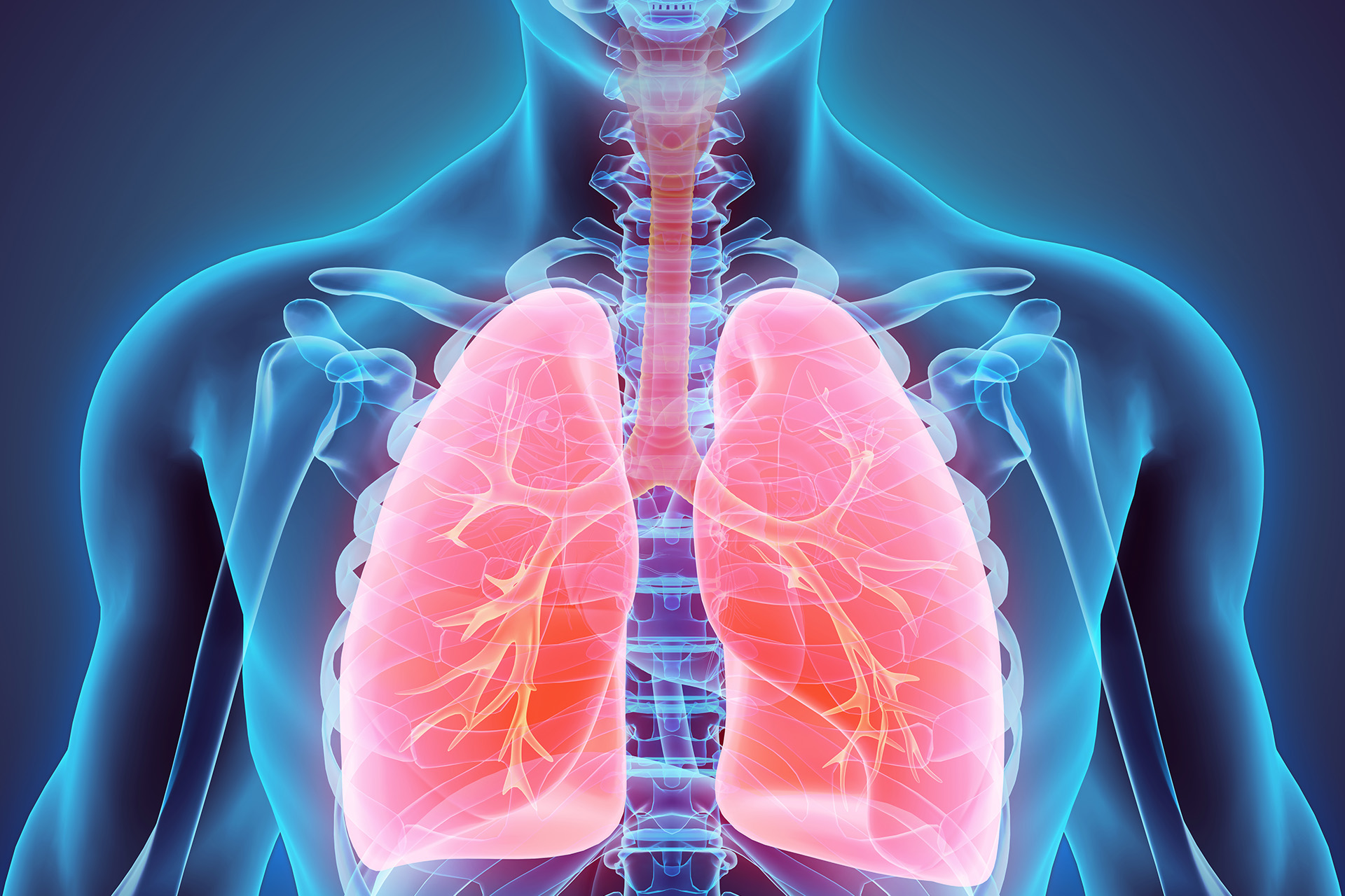 Дыхание — википедия с видео // wiki 2
