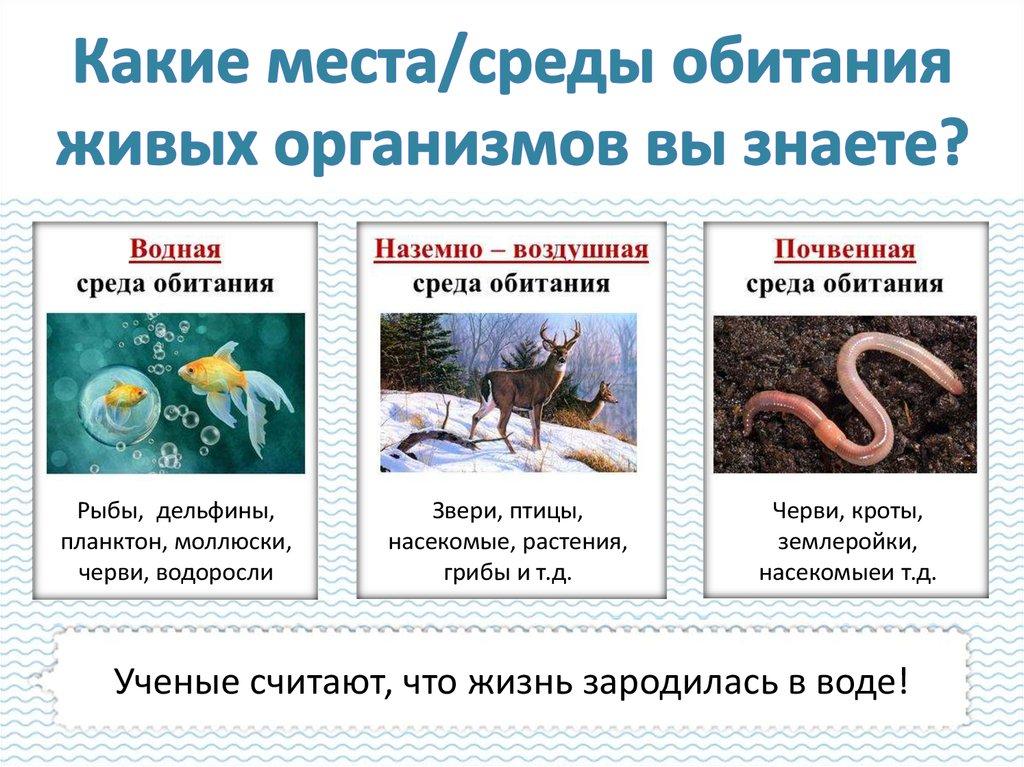 § 4. среды обитания организмов