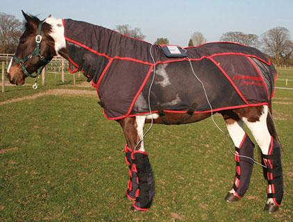 Попона: чтобы лошади было тепло и сухо