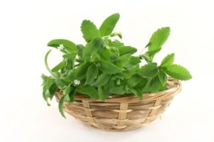 Трава стевия-заменитель сахара. польза и вред. применение