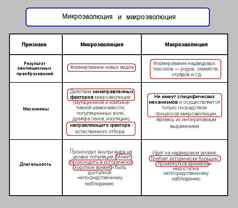 Что такое микроэволюция? в чем различие макро- и микроэволюции? :: syl.ru