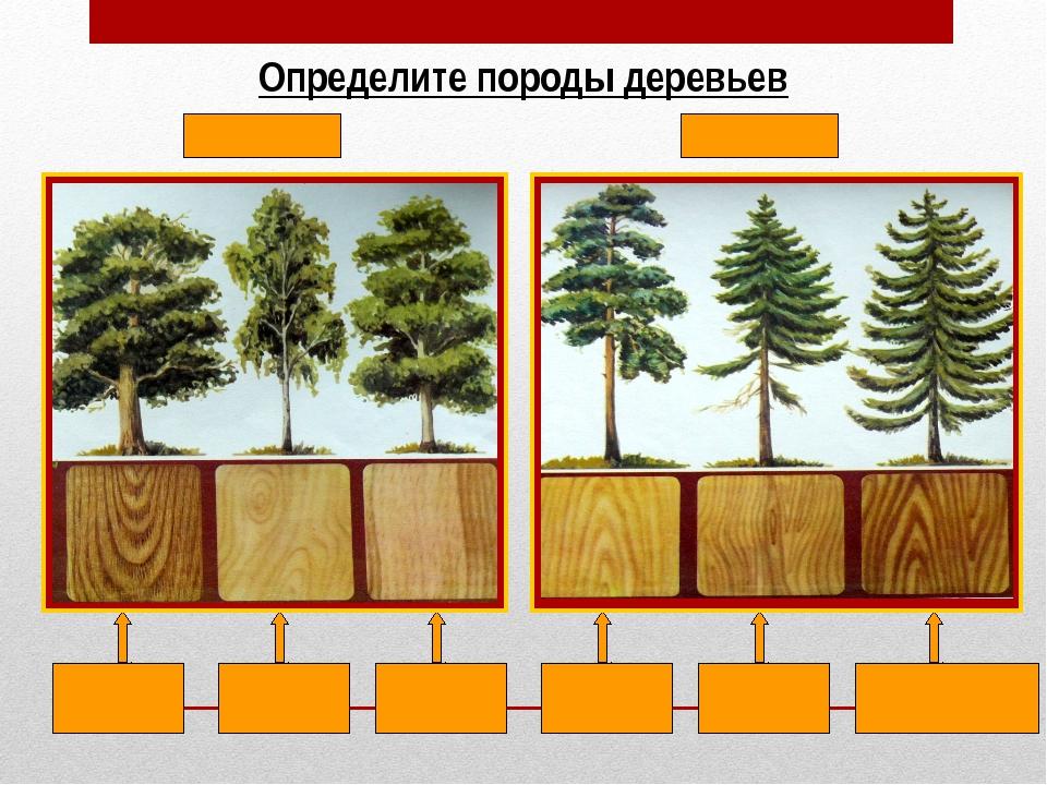 Влажность древесины