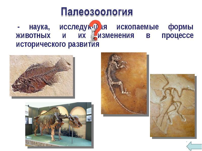 Зоология – наука о животных
