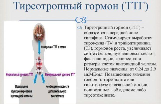 Тиреотропный гормон: норма ттг, что значит повышенный и пониженный