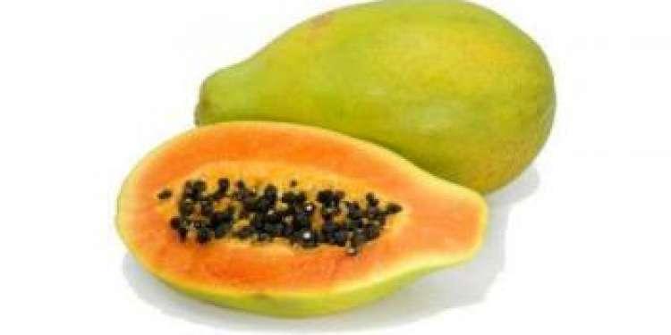 Выращивание папайи в домашних условиях, уход и размножение