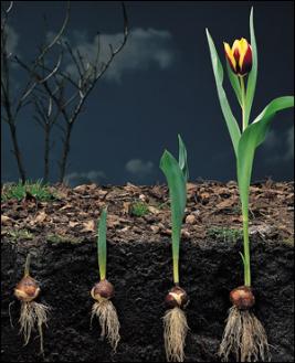 Читать книгу биология. бактерии, грибы, растения. 6 класс в. в. пасечника : онлайн чтение - страница 7
