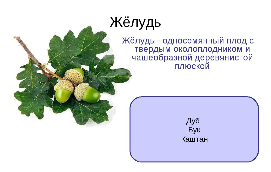 Многообразие видов дуба