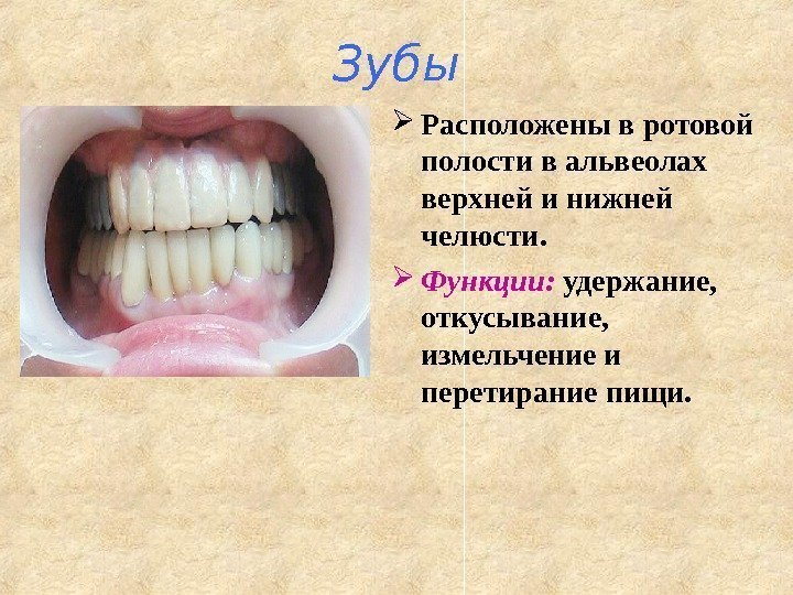 Причины, симптомы и лечение альвеолита