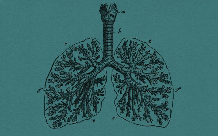 Туберкулема в легких — что это?