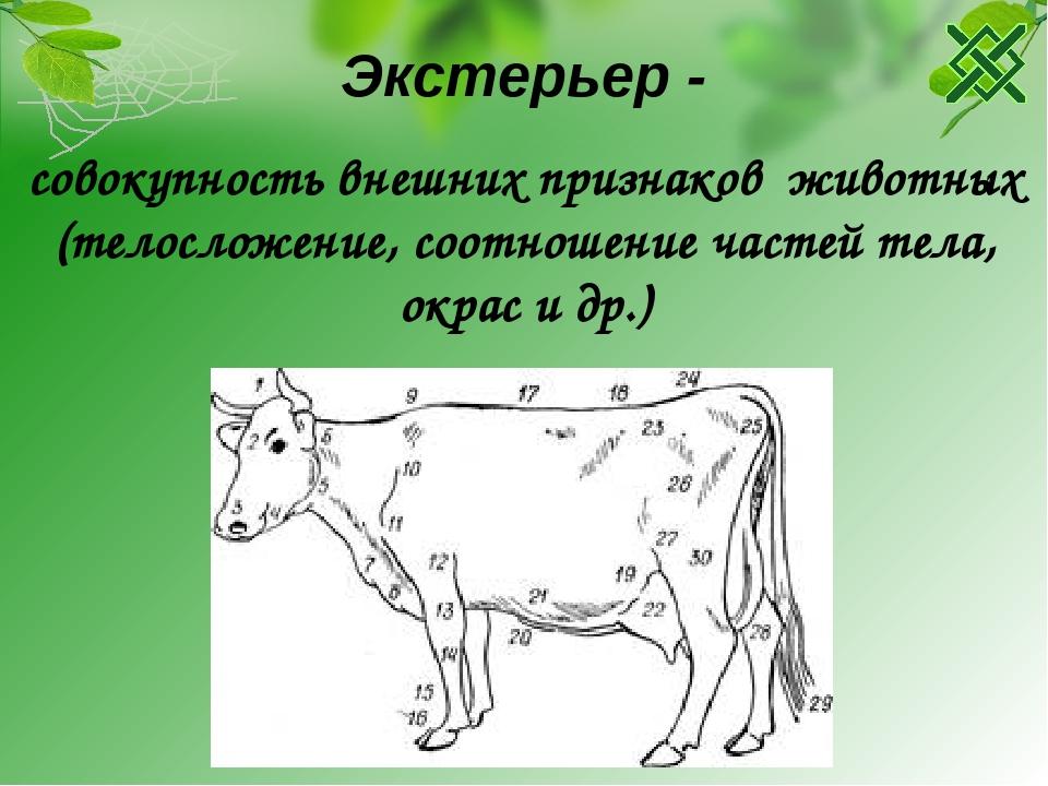Экстерьер животных - это... описание, методы определения, критерии