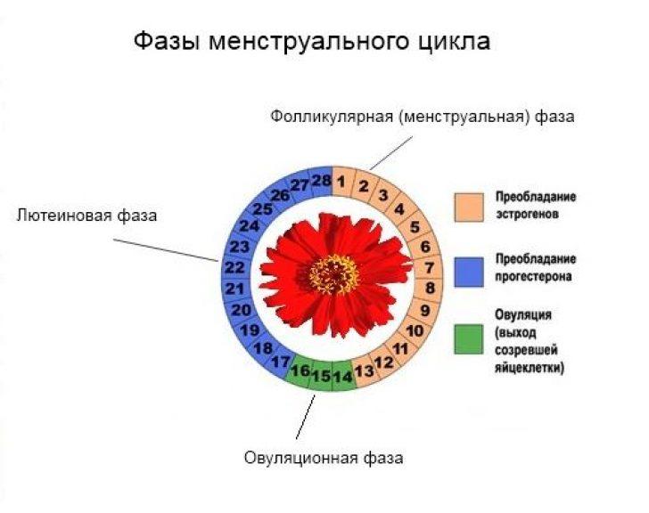 Лютеиновая фаза – как узнать, все ли в порядке с прогестероном?