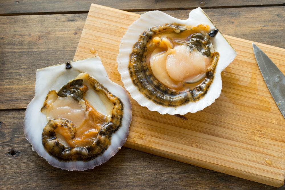 Морские гребешки — википедия. что такое морские гребешки