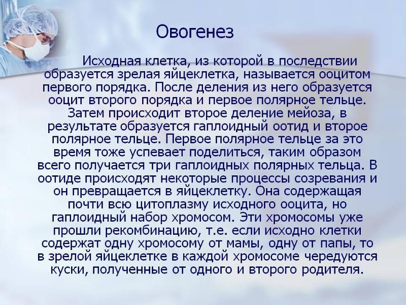 Оогенез - oogenesis - qwe.wiki