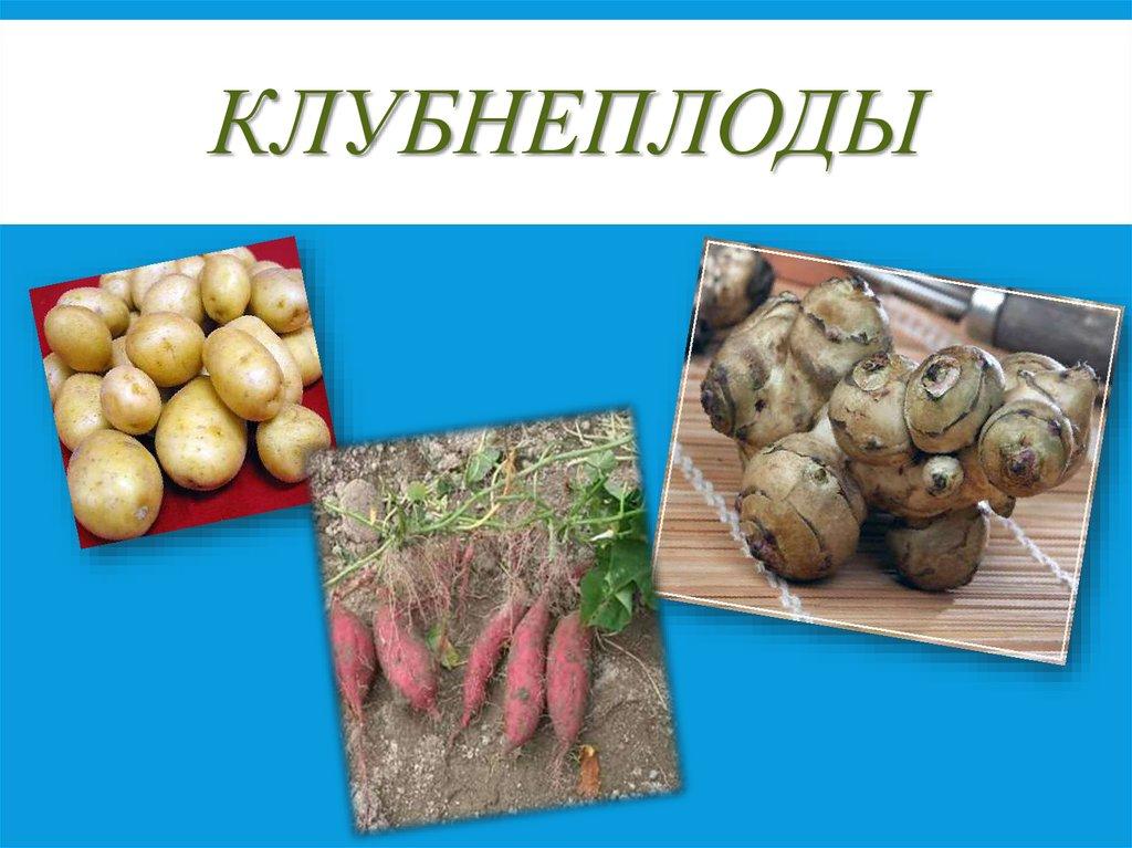 Незаменимый овощ на русском столе - свекла