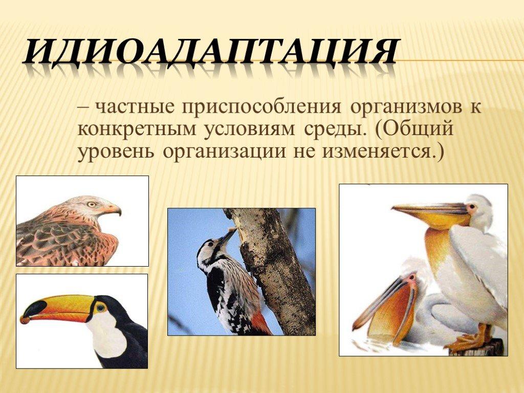 Идиоадаптация животных и растений: примеры