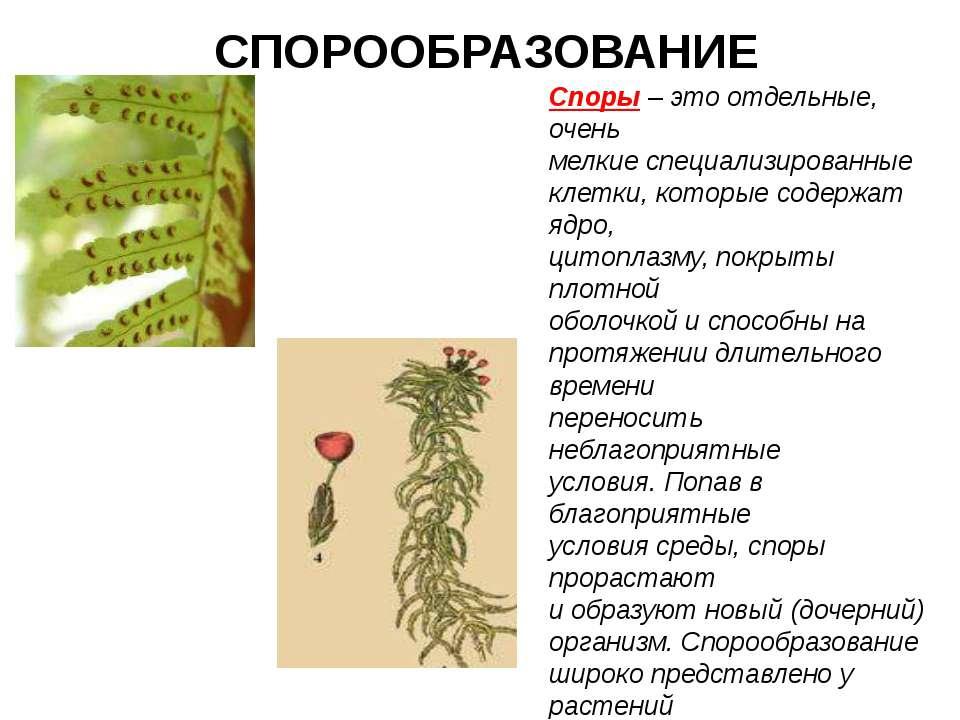 Spore | spore wiki | fandom