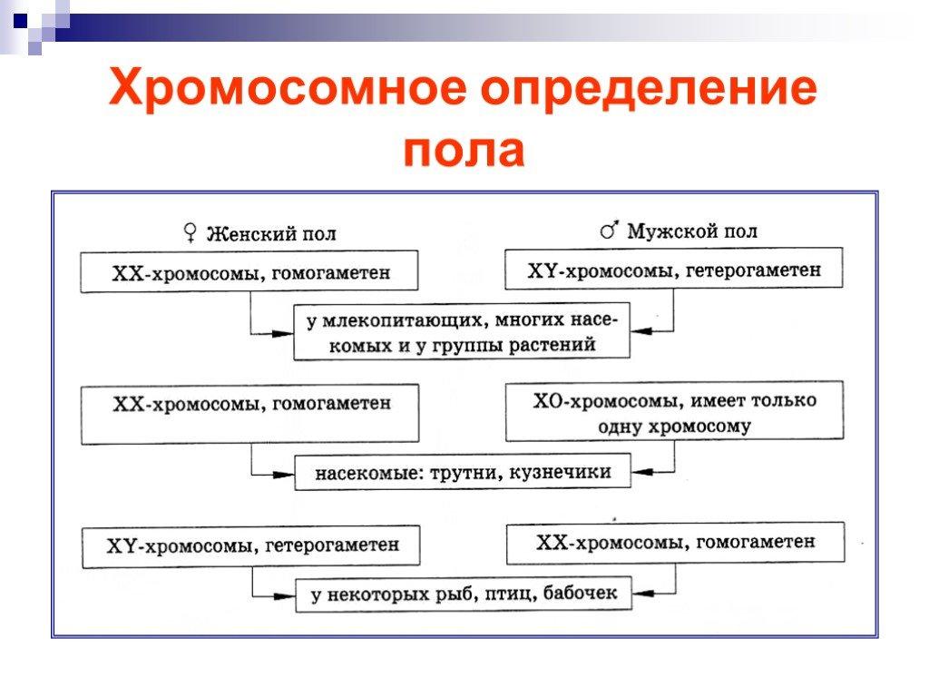 Что такое гетерохромосомы? / биология | thpanorama - сделайте себя лучше уже сегодня!