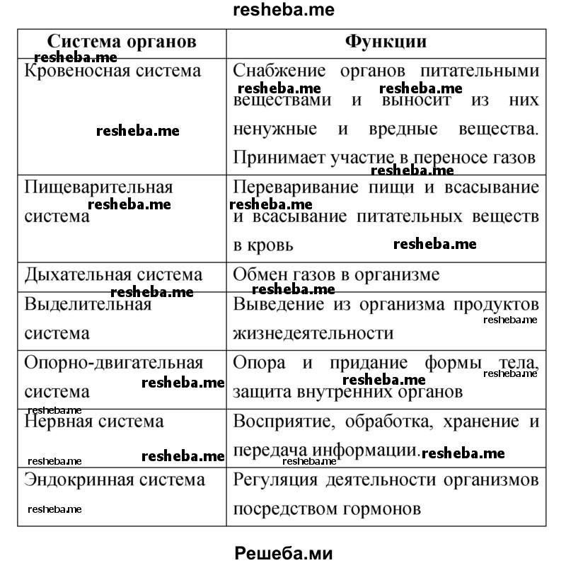 Системы внутренних органов человека