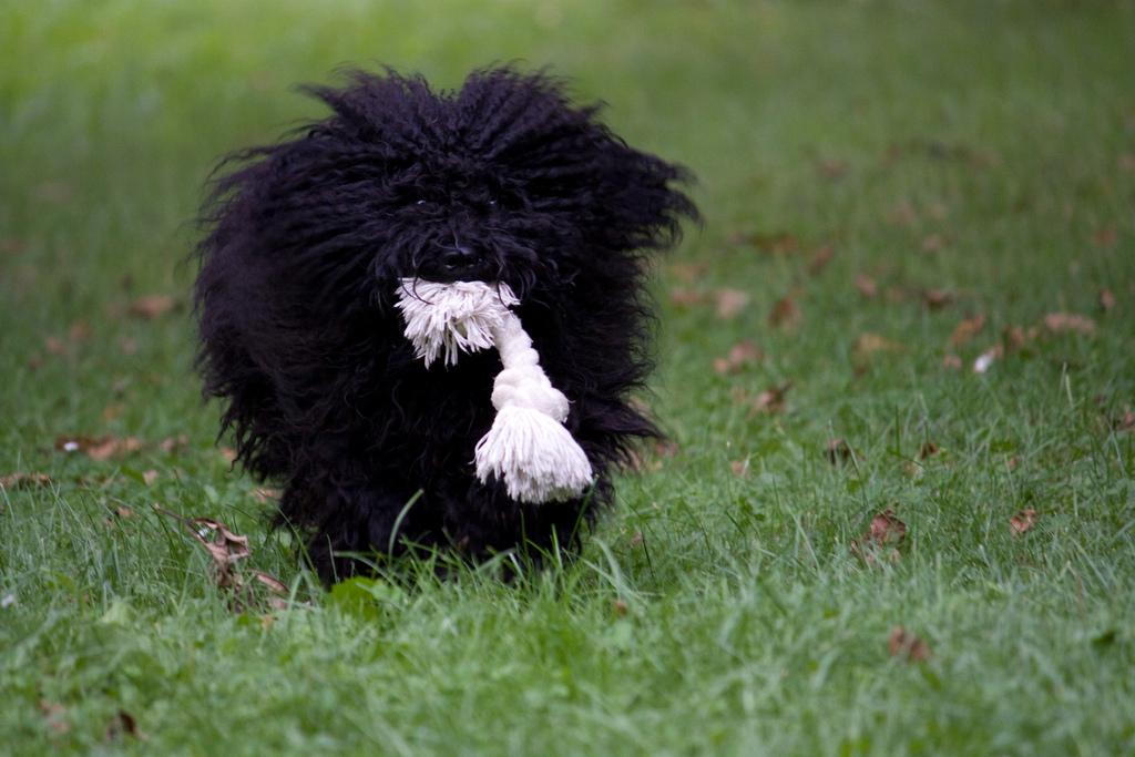 Фурминаторы для длинношерстных собак — все, что об этом нужно знать