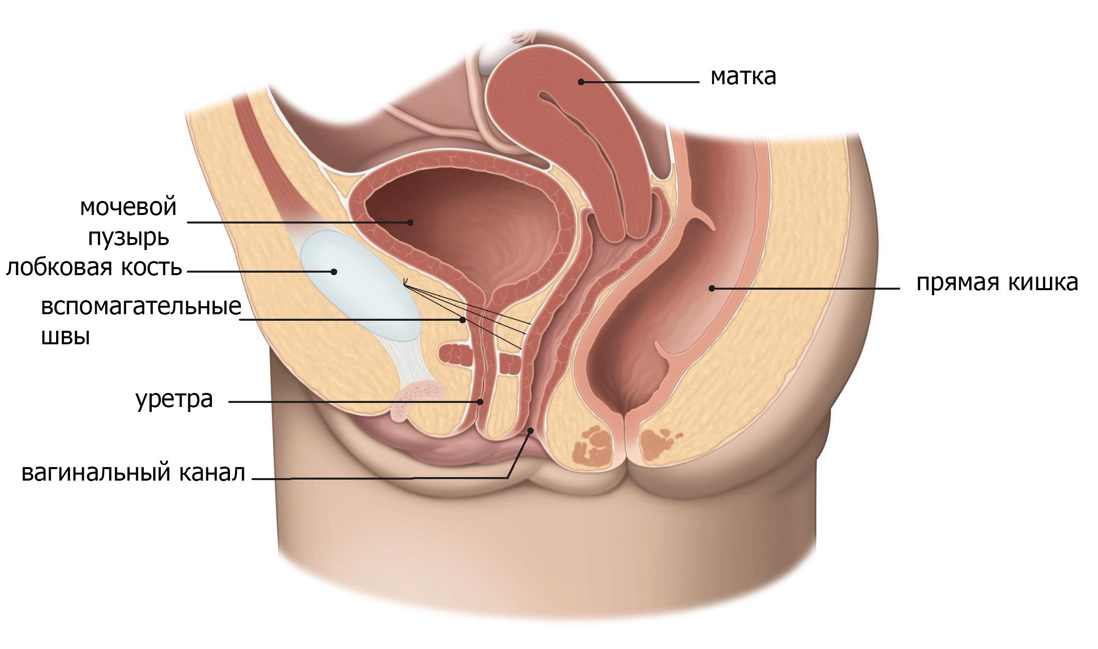 Уретрит у женщин — симптомы и лечение препаратами, диагностика, профилактика