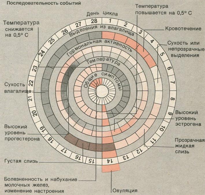 Как посчитать менструальный цикл, календарь расчета месячных