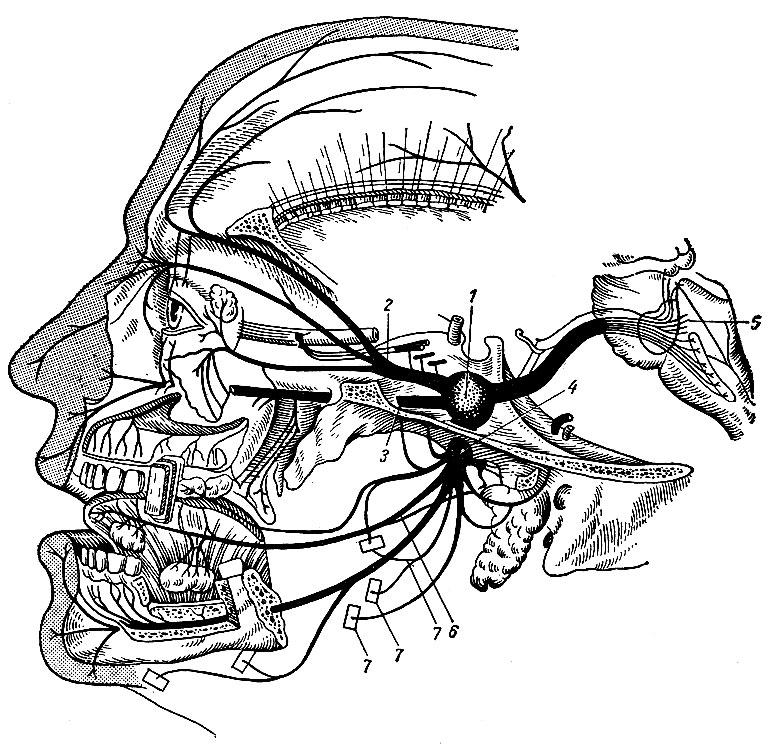 Нервы - это что такое? нервы как часть нервной системы человека. повреждение нерва