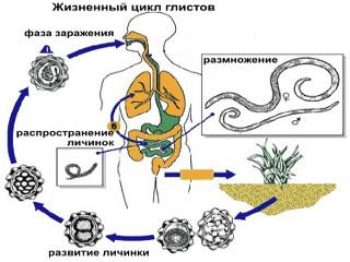 Что такое дегельминтизация и как ее проводят?