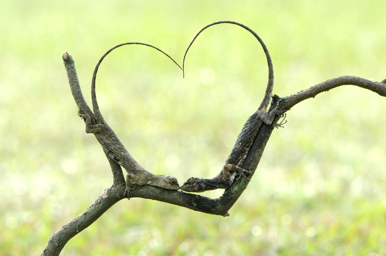Химия любви: что такое любовь, влечение с научной точки зрения