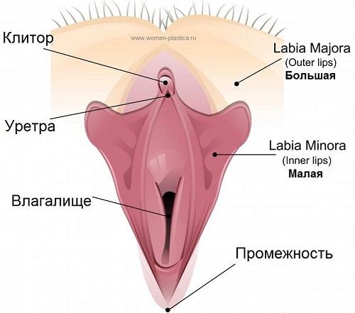 Болезни половых губ | moninomama.ru