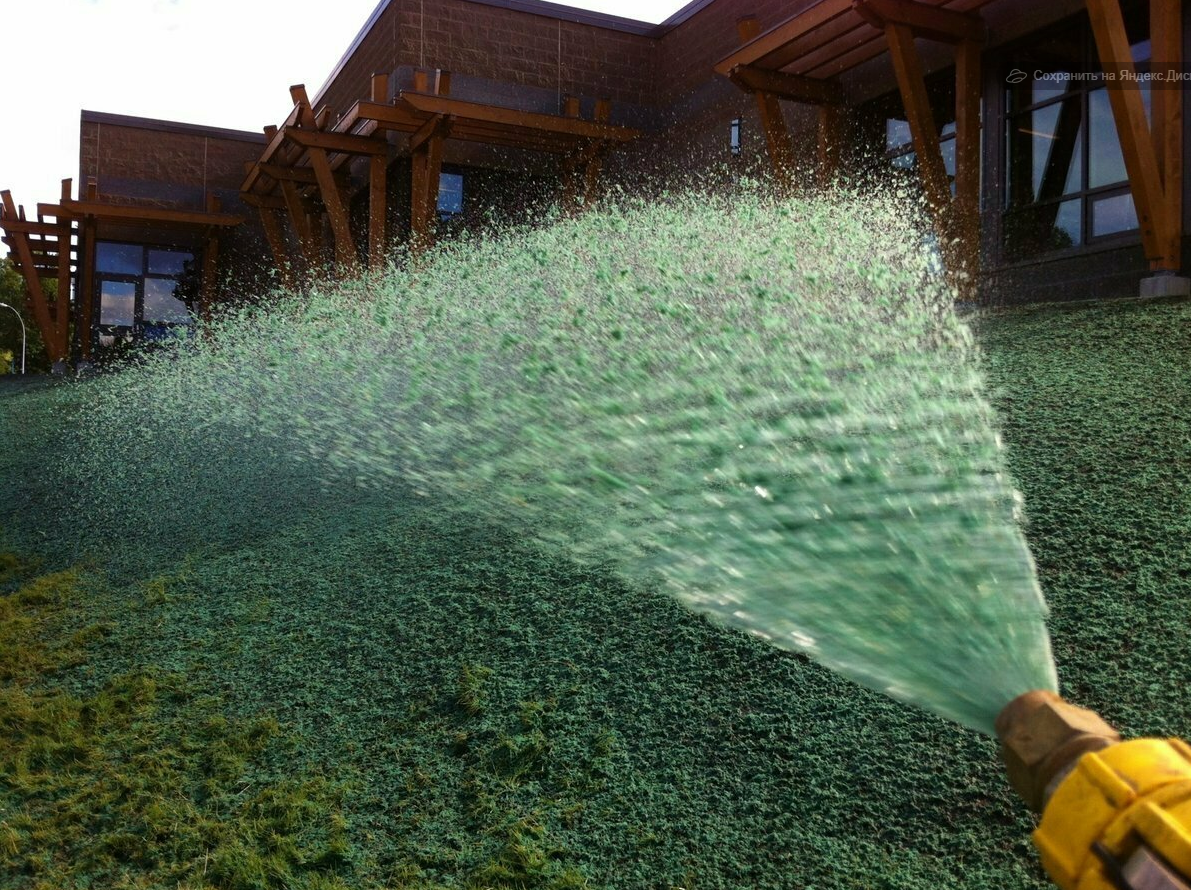 Жидкий газон, что это такое?