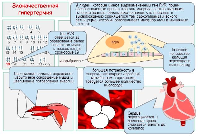 Нейрогенная гипертермия (повышение температуры тела) | компетентно о здоровье на ilive