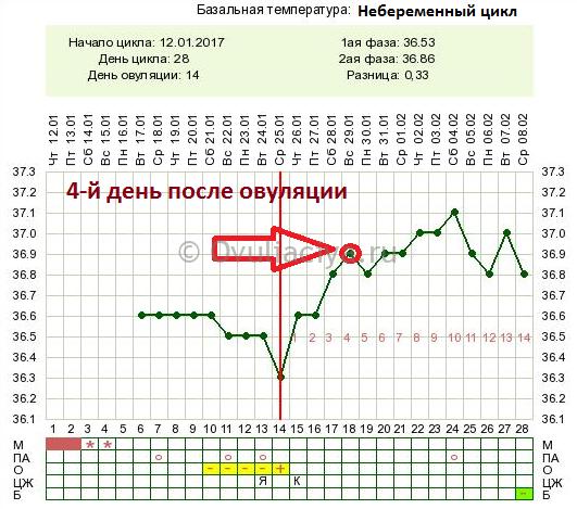 График бт при беременности. график базальной температуры до задержки с примерами. как измерить базальную температуру?
