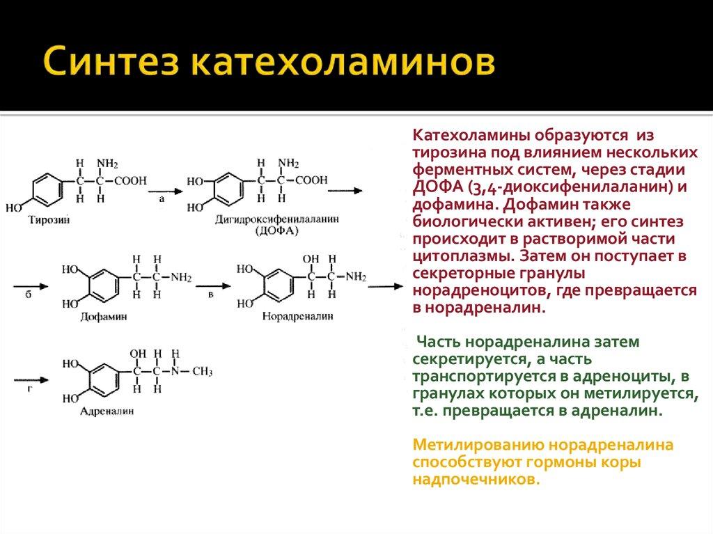 Анализ на катехоламины крови. общие сведения