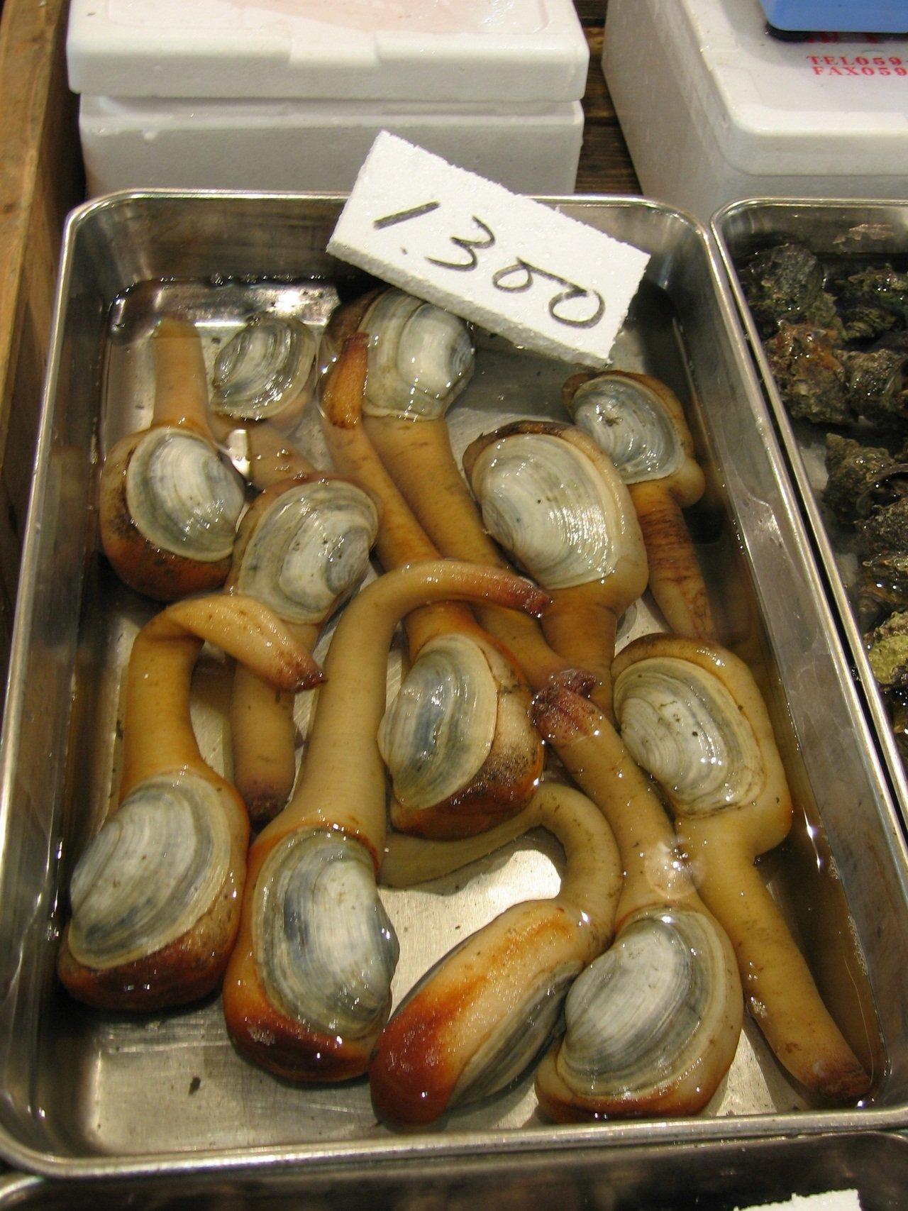 Моллюск гуидак: кто это и как его едят, рецепты с фото