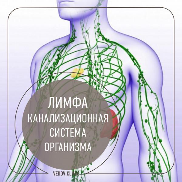 Что такое организм: определение, функции, виды и особенности :: syl.ru