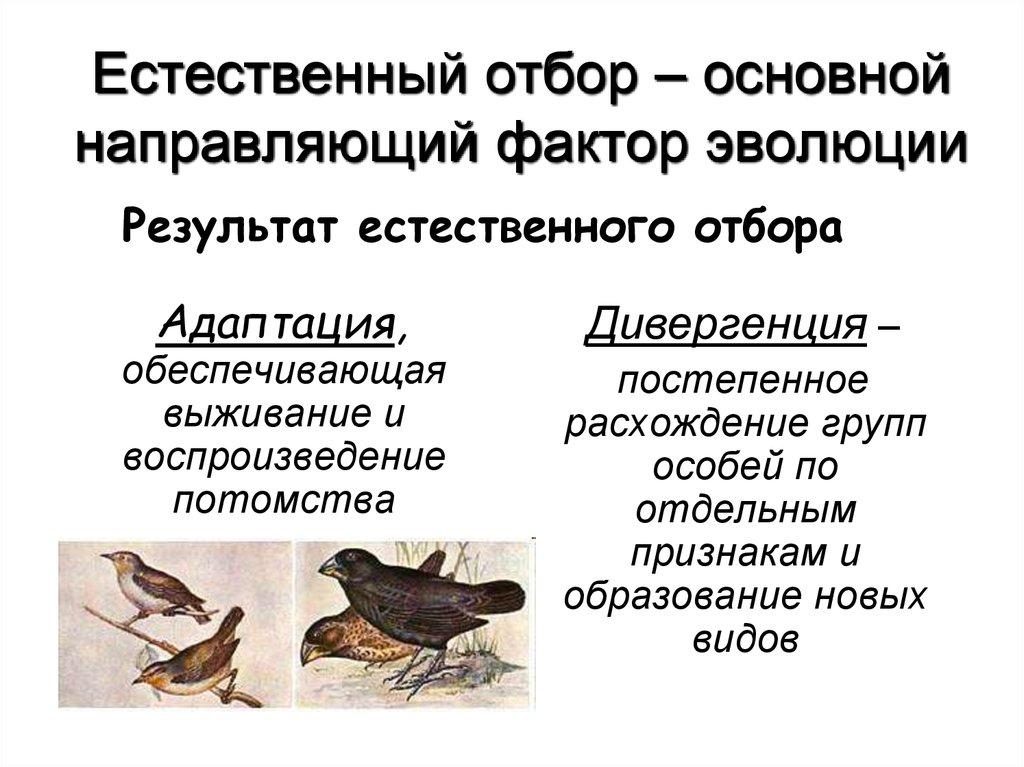 Естественный отбор — википедия. что такое естественный отбор