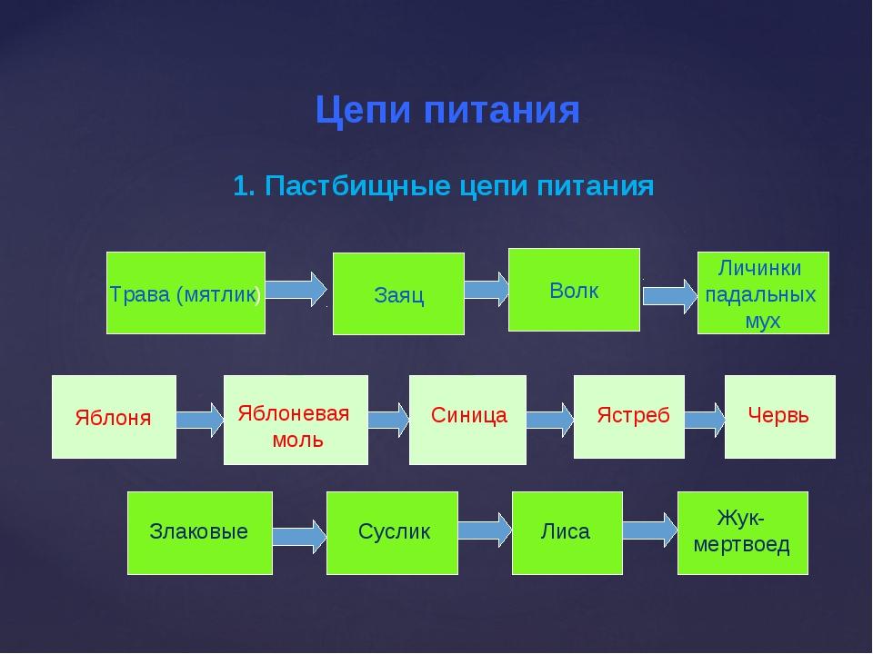 Детритная пищевая цепь