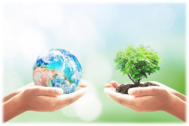 В чем состоит смысл экологической морали: три главных правила