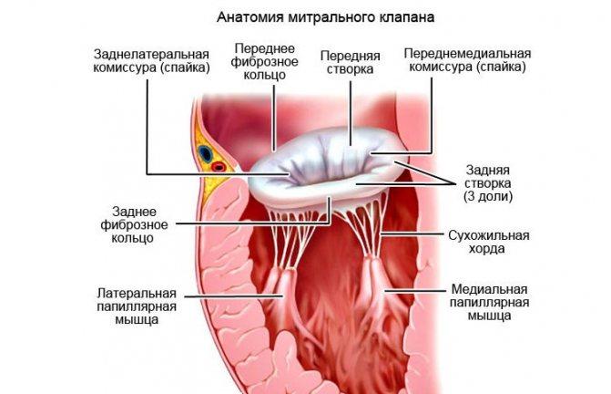Чем опасен пролапс митрального клапана 1 степени