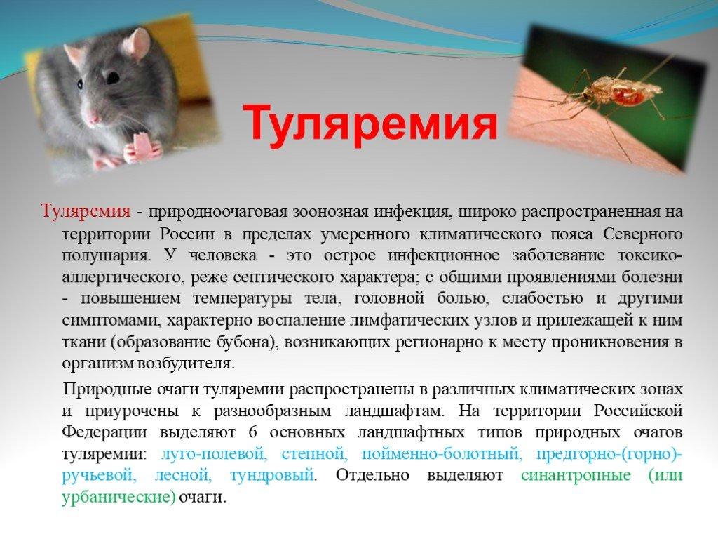 Зоонозные инфекции: список, возбудители, симптомы, лечение и профилактика