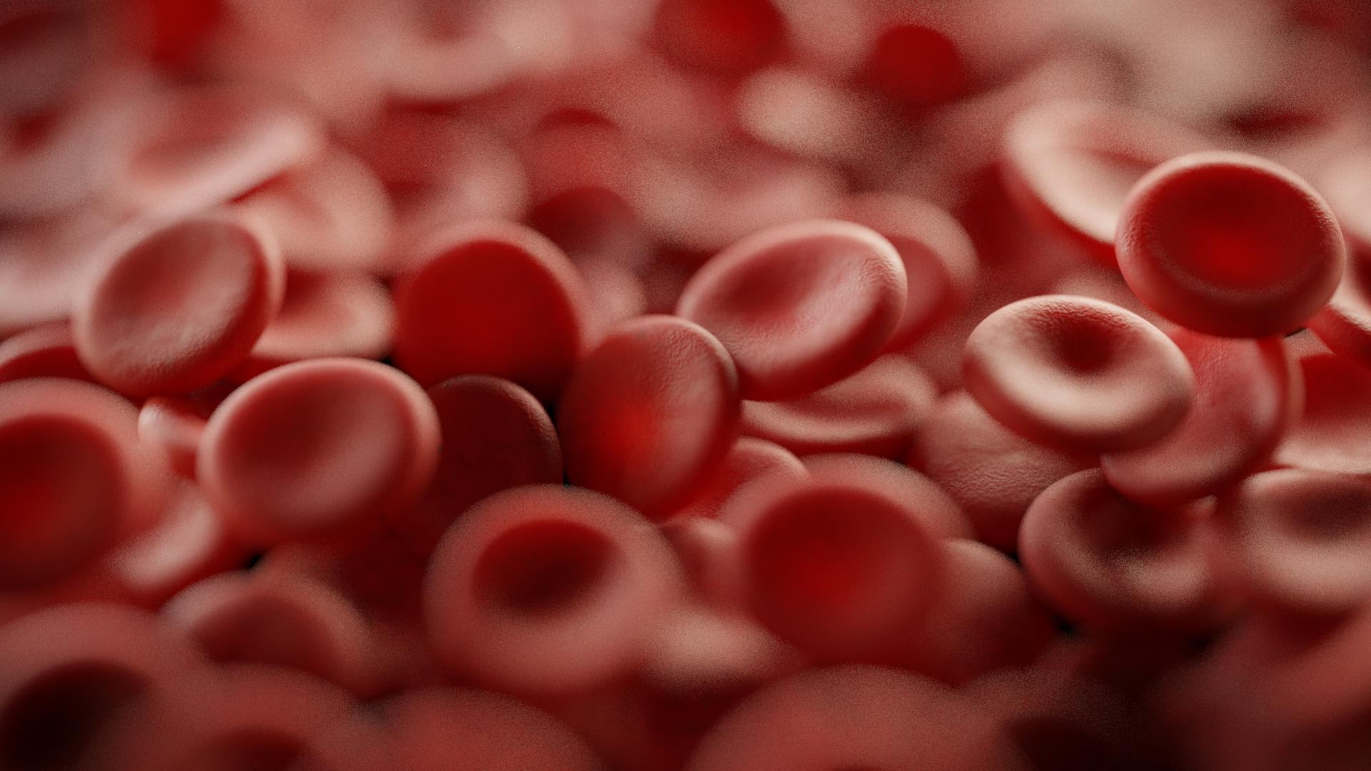 Что такое эритроциты: функции и характеристики красных кровяных телец — net-bolezniam.ru