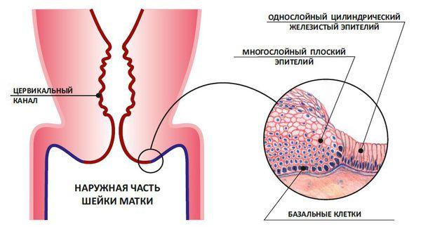 Соскоб эпителия эктоцервикса и эндоцервикса смешанный мазок