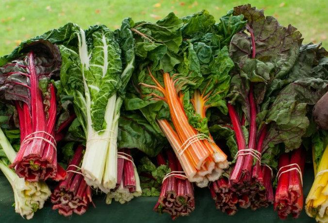 Польза мангольда: 115 фото растения, рецепты и особенности приготовления