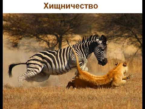 Примеры хищничества в природе у животных и растений