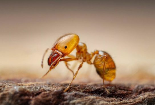 Муравьи: описание, виды с фото, чем питаются, интересные факты